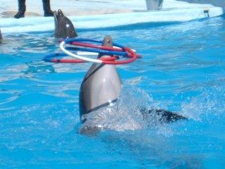 Hoop-la aqautic mammal style